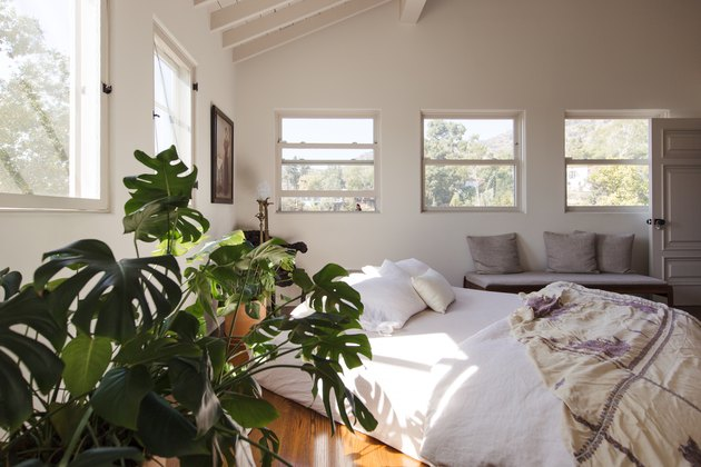 Room with windows and plants white bedding