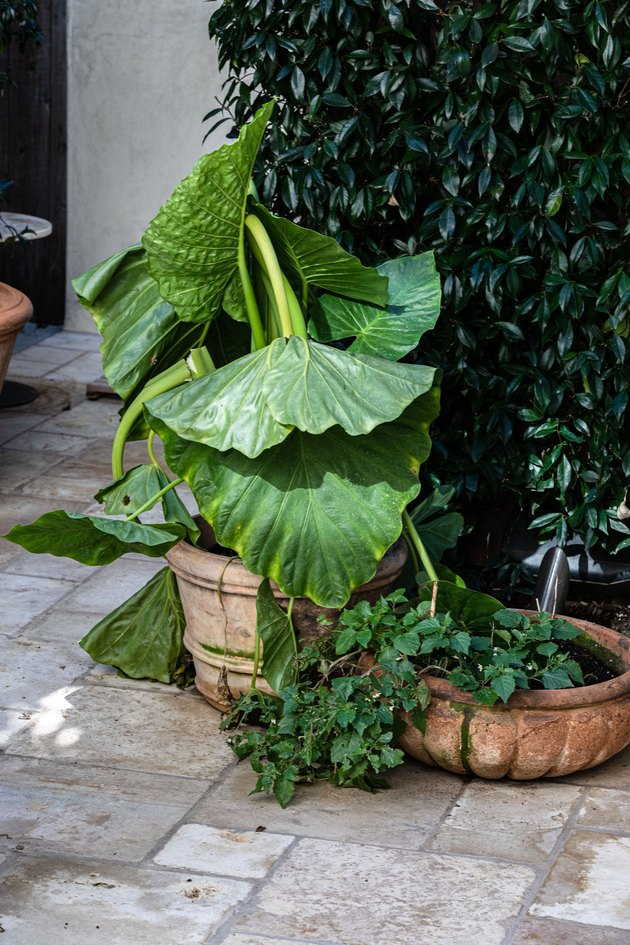 A potted plant next to ivy