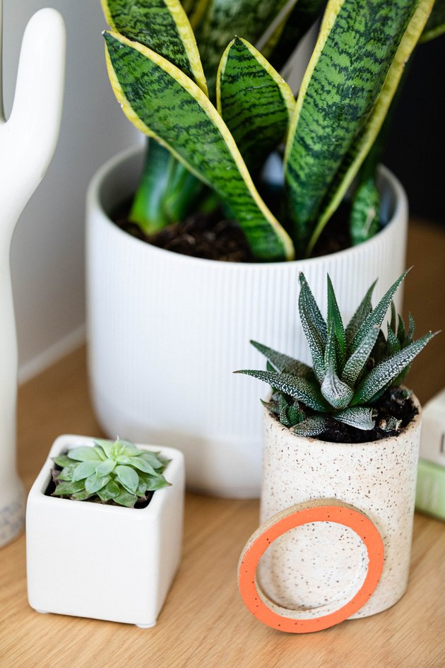 three indoor potted plants with succulents