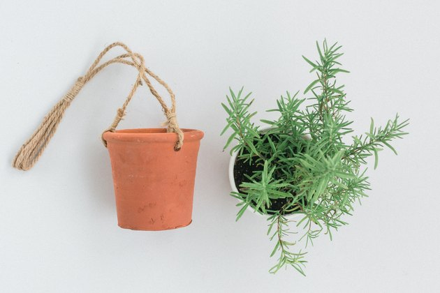 Terracotta pot with rope next to potted herb plant