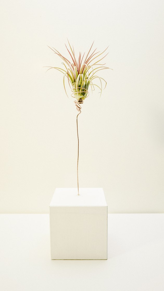 an air plant cupped in a wire plant holder sticking out of a wooden block
