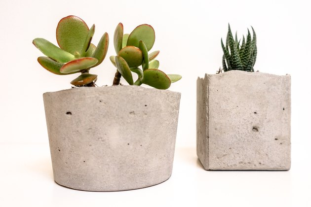 two succulents growing out of a diy square concrete planter with rough edges