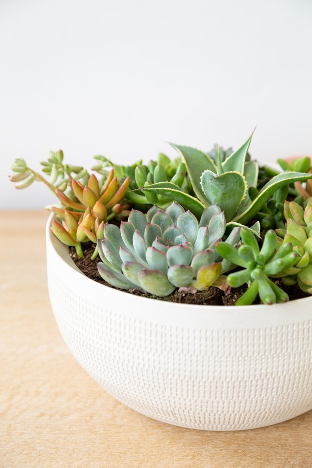 a diy planter made from a white ceramic bowl containing several succulents of various shapes and sizes