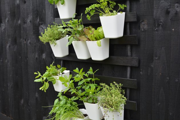 Outdoor vertical garden DIY