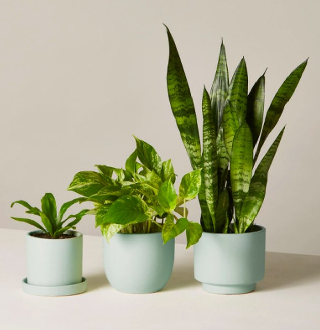 The Sill Beginner's Plants Collection