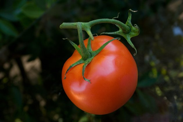 The Best Time of Day to Plant Tomatoes