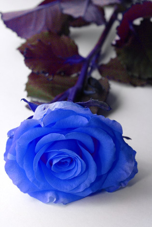 How to Dye White Roses Blue