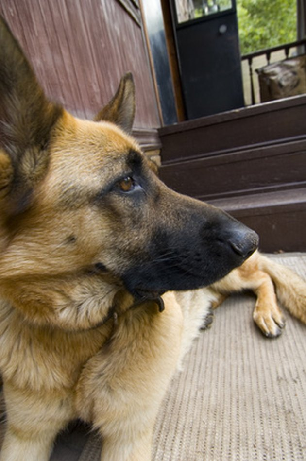 How To Get Rid Of Pet Stains Amp Odor In Carpet Hunker