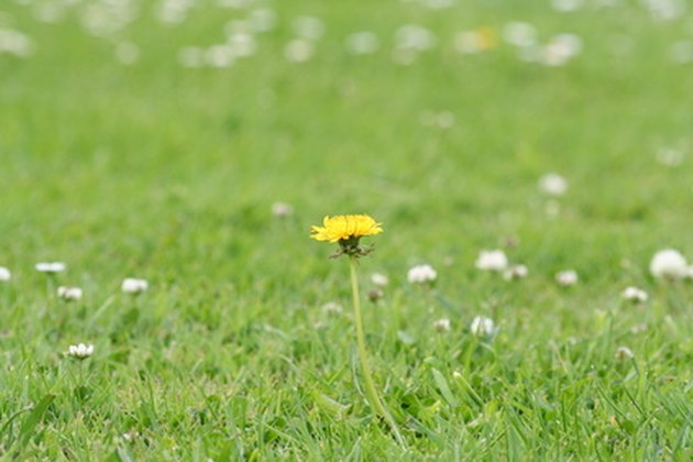 The Best Weedkillers That Won't Kill Grass