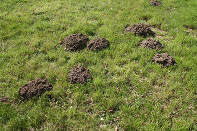 How to Repel Gophers & Moles