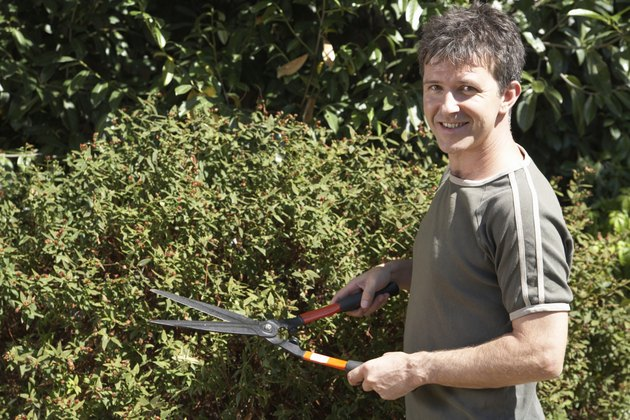 Man standing by bush holding garden shears, portrait