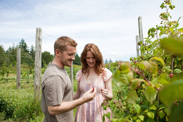 Young couple picking raspberries