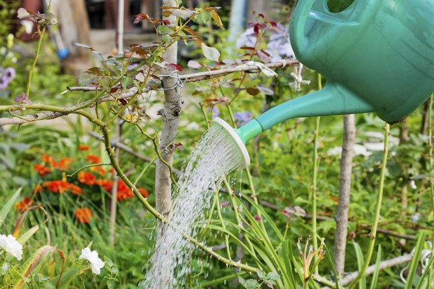 green grass watering from plastic can