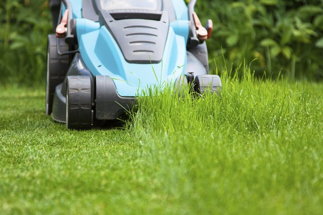 blue lawn mower on green grass  cut the grass