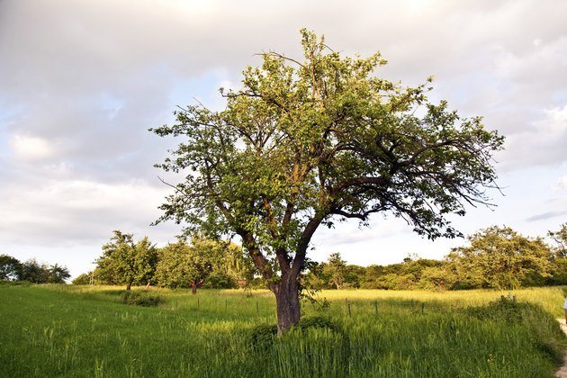 tree in sunset and green grass