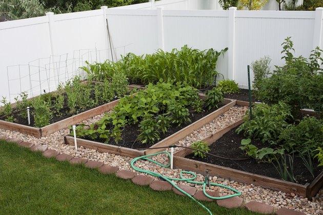 Backyard Organic Vegetable Garden