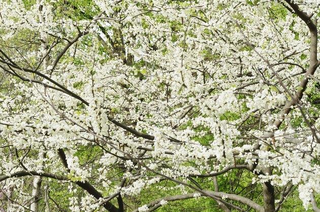 Spring profusion