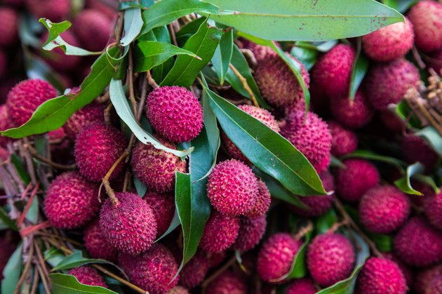 Ripe lychees ready for harvest.