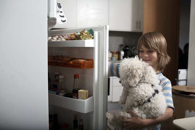 boy and pet dog look in refrigerator