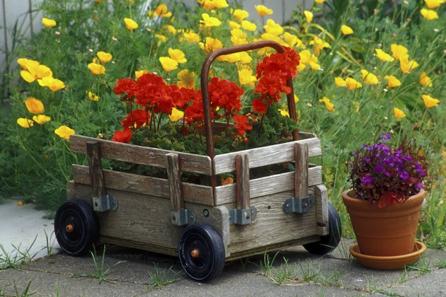 High angle view of a potted plant near a push cart in a garden