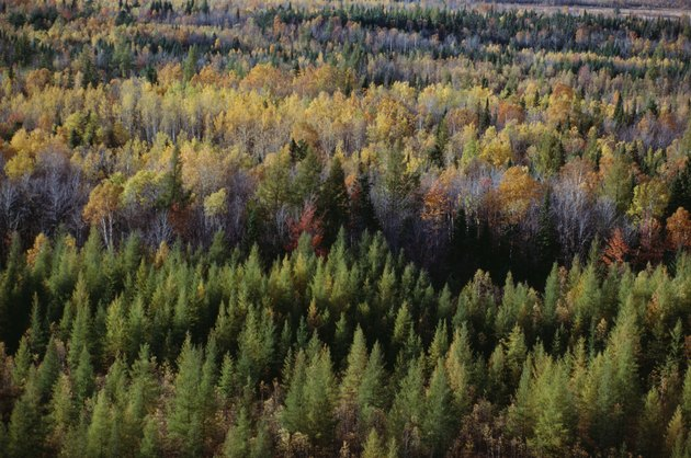 Autumn forest in La Mauricie National Park in Quebec, Canada