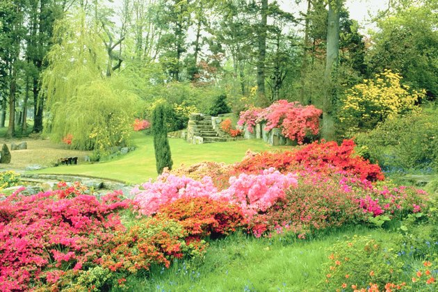 Flowers in lush garden