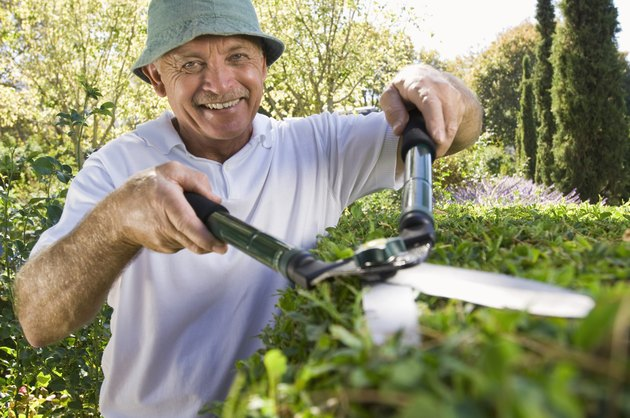 Man trimming hedges with shears