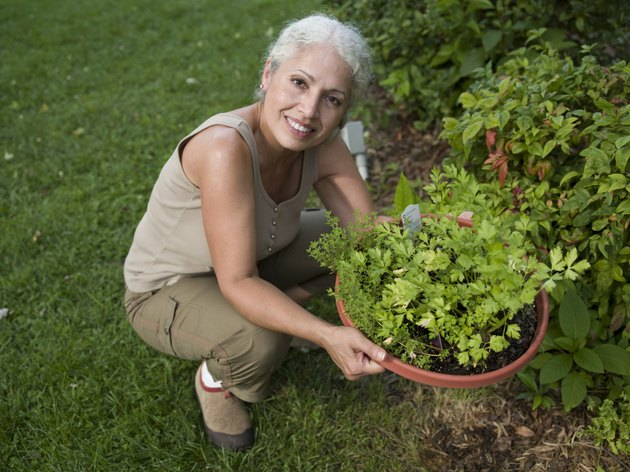 Portrait of mature woman in garden holding flower pot with herbs, smiling