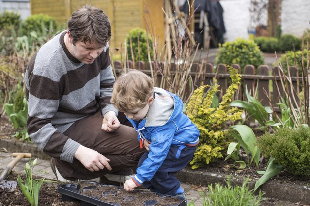 Little boy and his father planting seeds in vegetable garden