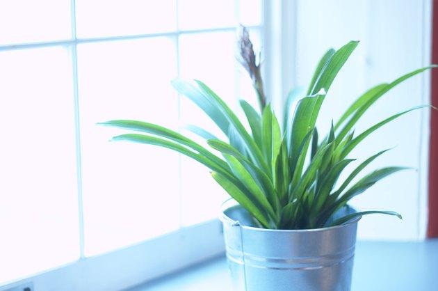 Houseplant getting sunlight in window