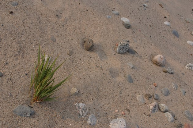 Sand in desert