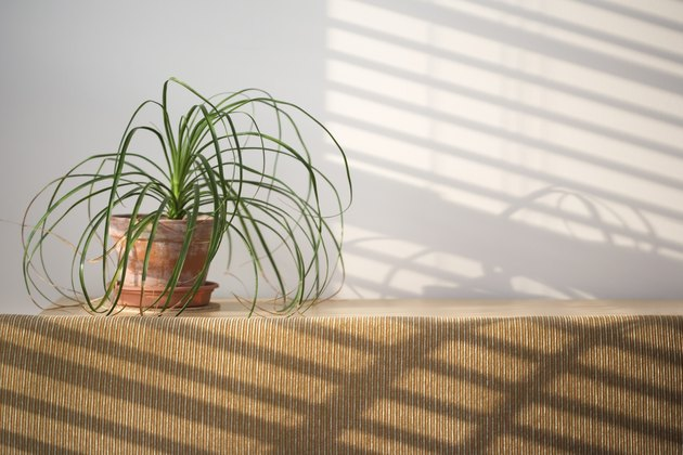 Houseplant on shelf with shadows on wall