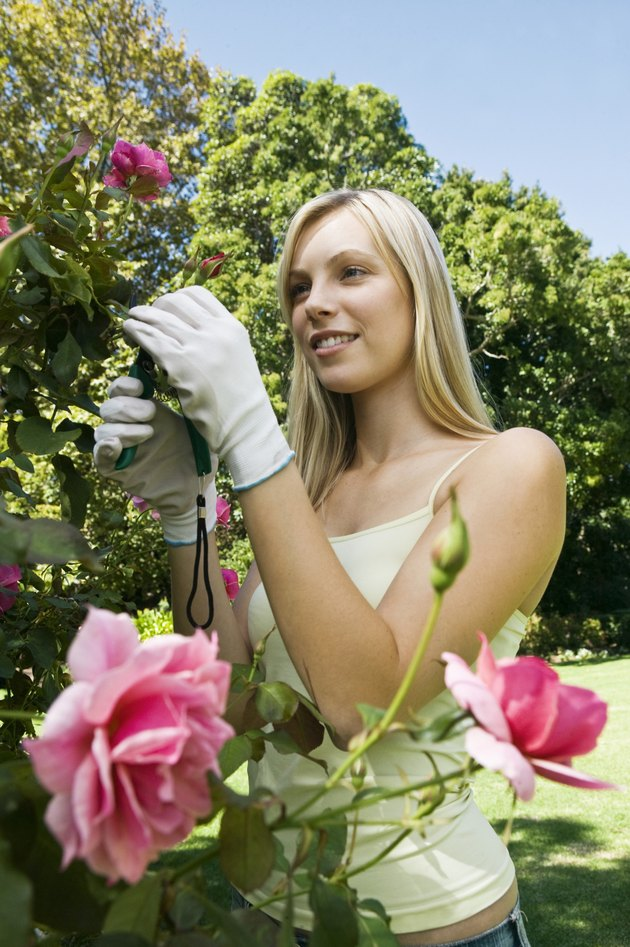 Woman with a rosebush