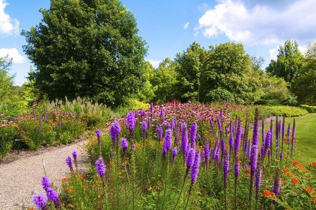 Wildflower patch