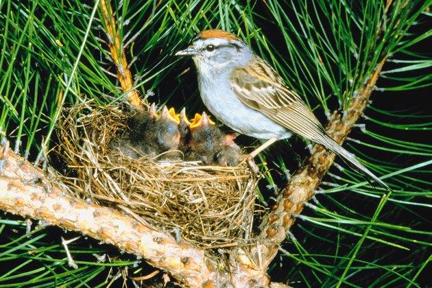 Bird with offspring in nest