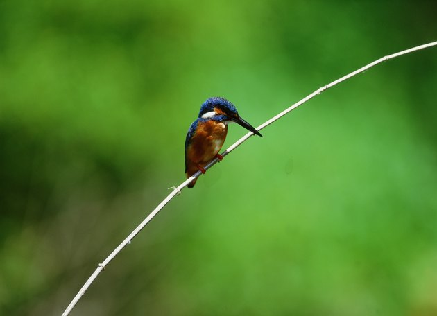 Hummingbird on a twig
