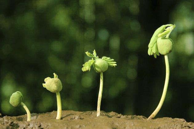 Plant-New life