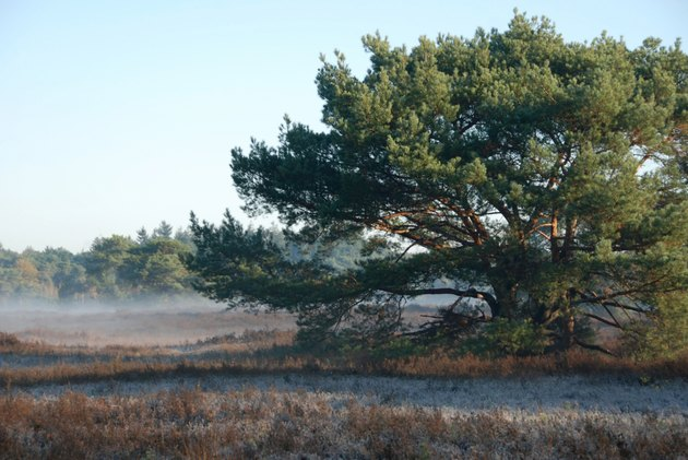 Panorama heathland