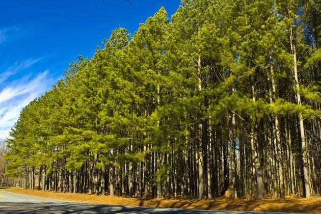 Trees on the Roadside