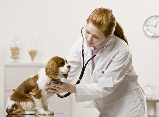 Young Female Veterinarian