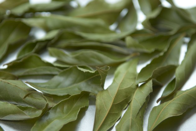 Bay leaves, close up