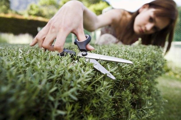Woman pruning bush