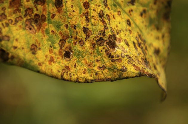 Close up of spotted brown and yellow leaf