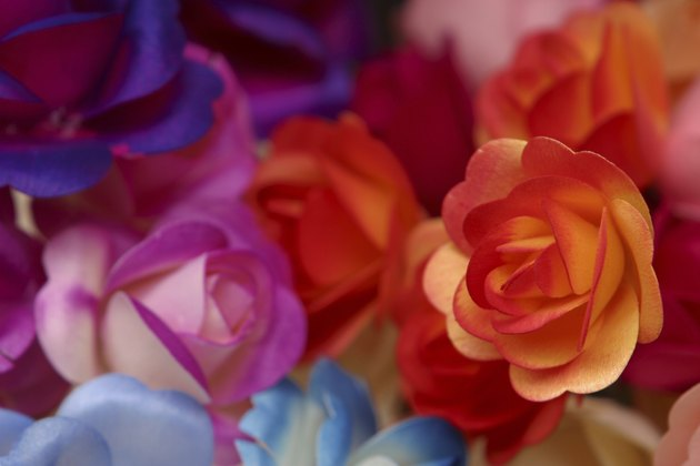 Colorful roses for sale in marketplace