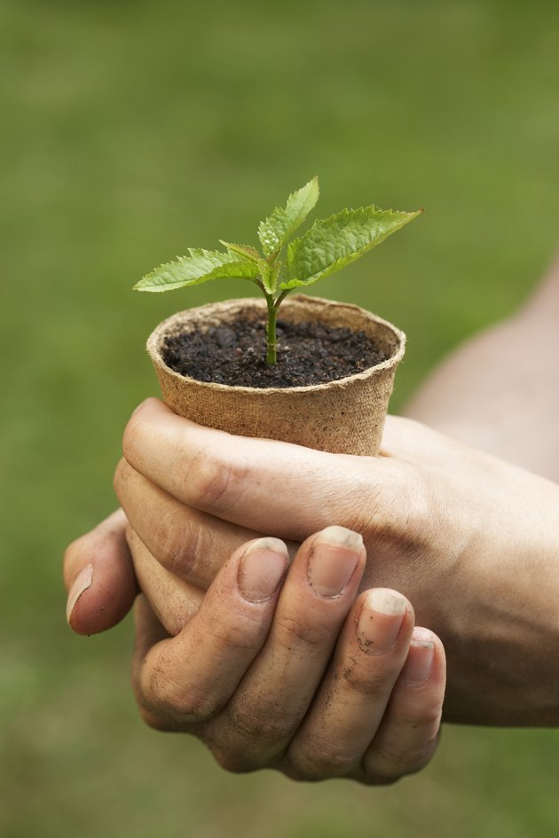 Woman holding seedling in flowerpot, close-up of hands