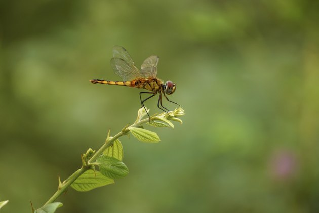 Dragonfly in the Botanical Gardens.