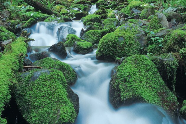stream cascading over mossy rocks in Olympic National Park