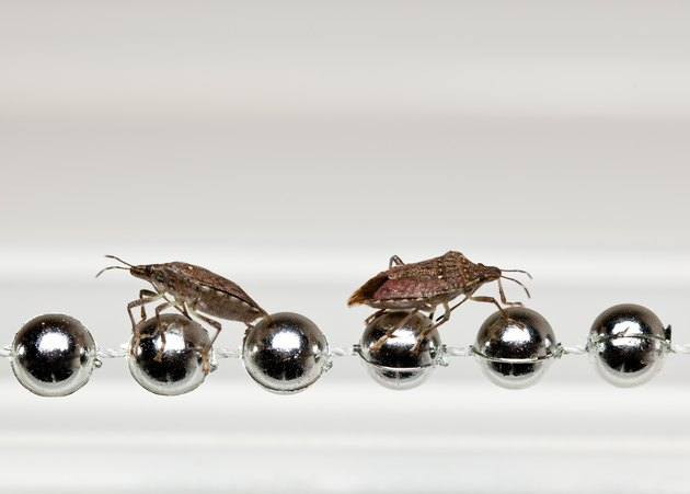 Two Stink bugs on xmas decorations