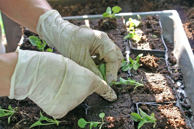 Woman planting a little plant