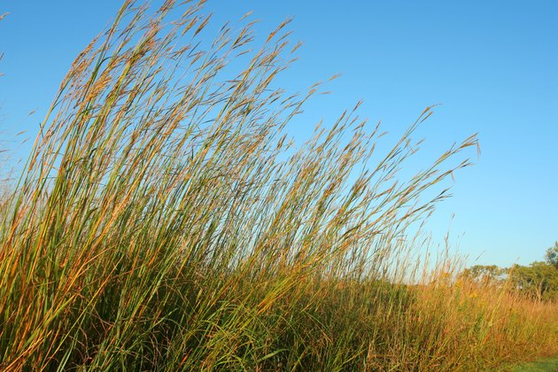 Big Bluestem, blue sky
